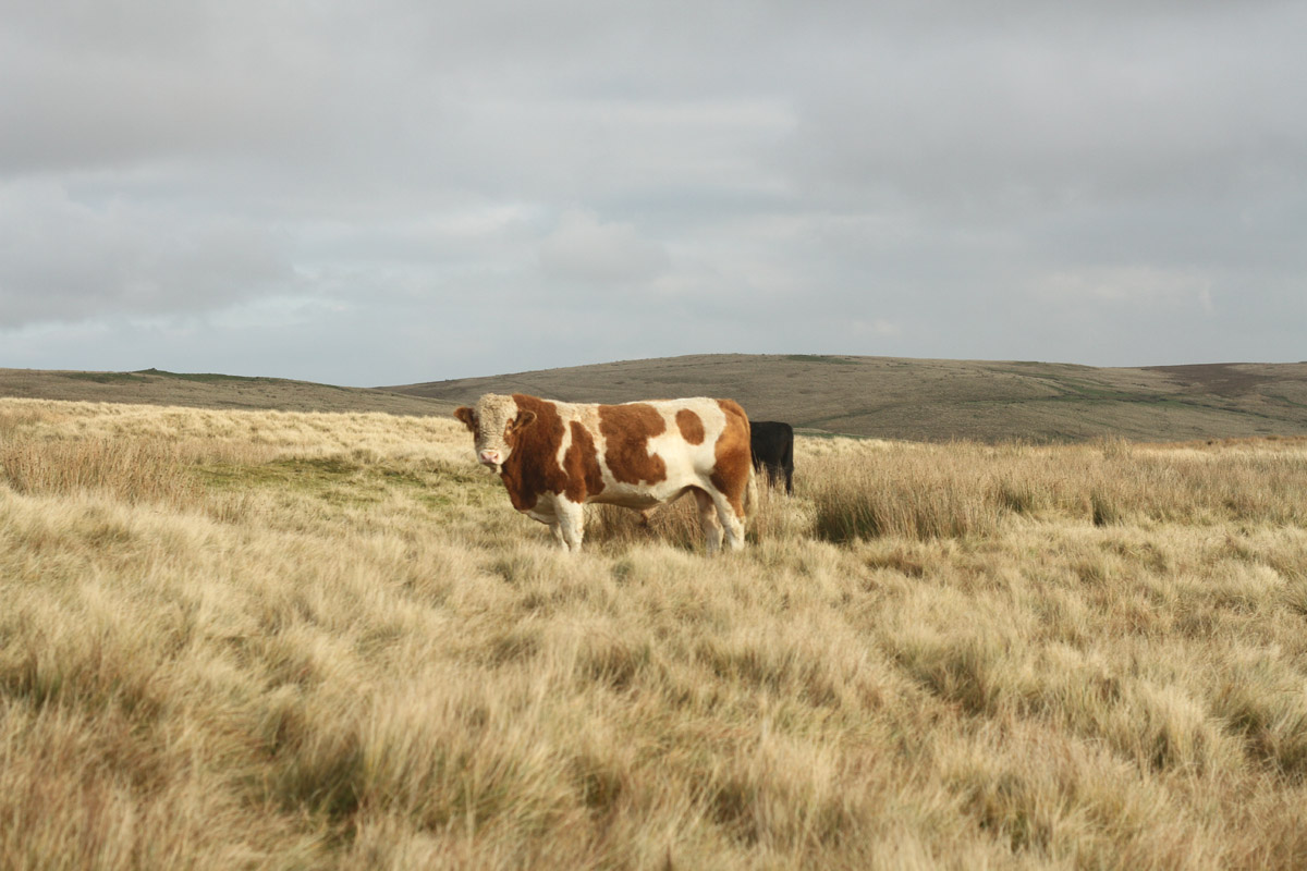 an image of farm life in the UK and Ireland taken as part of the FIELD residency by Shane Finan