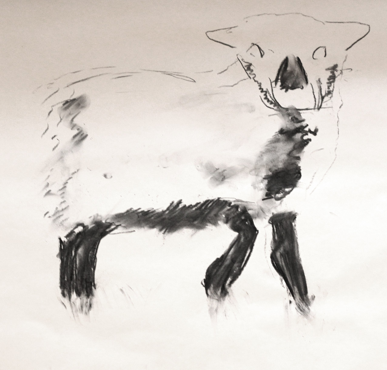 a charcoal drawing of a lamb tentatively holding up one of its legs