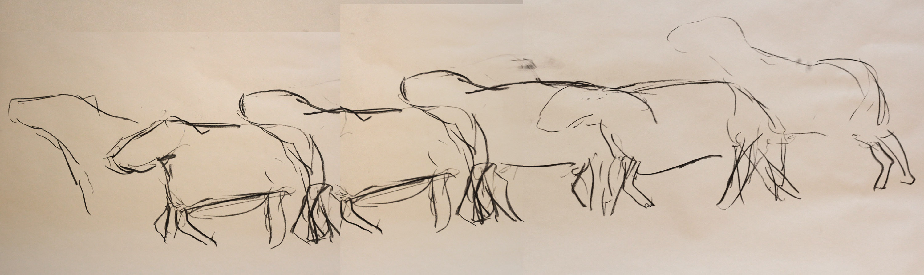 a long charcoal drawing that shows five stages of movement of a sheep with lameness, drawn sequentially and in loose, traced outline