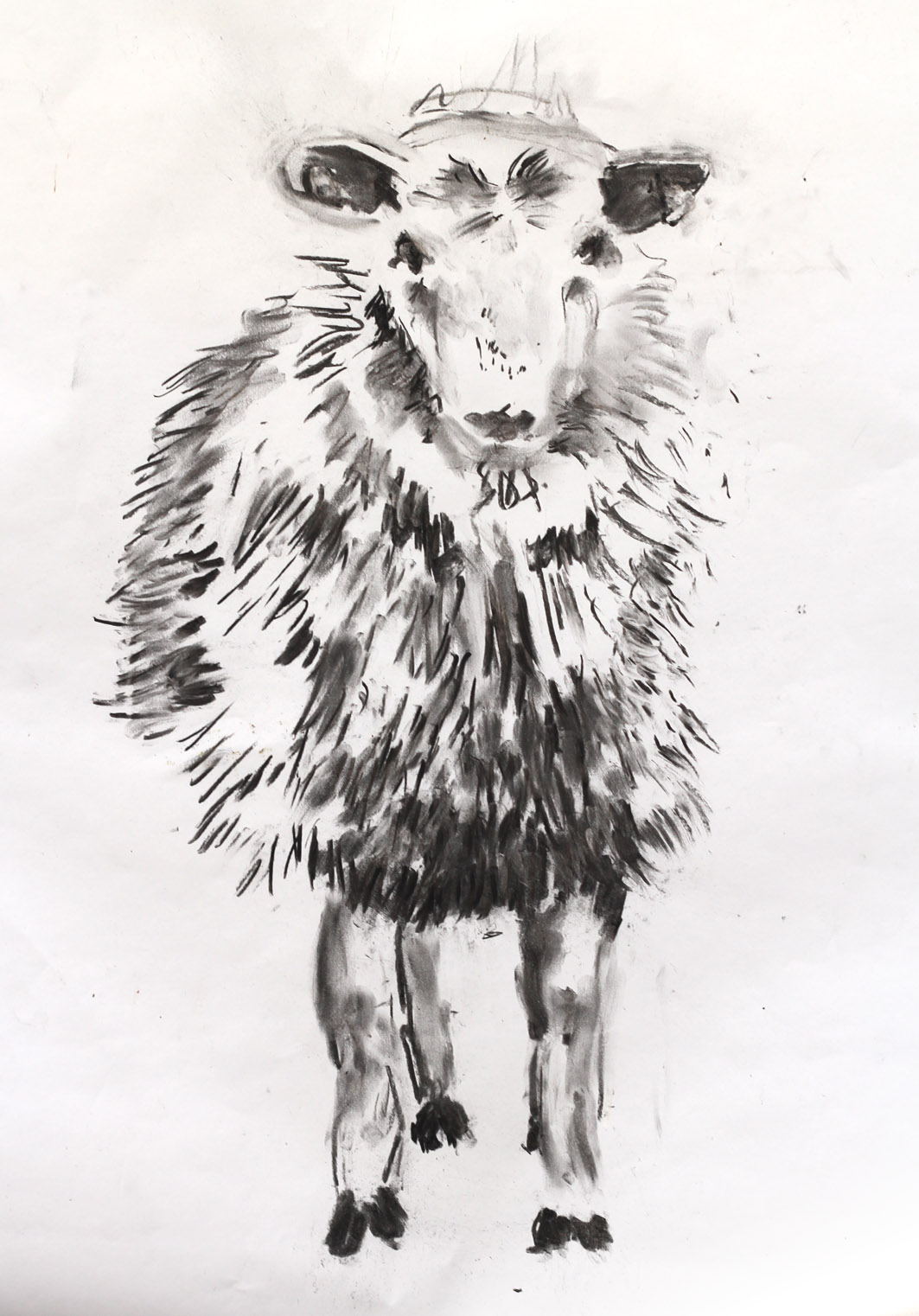 A charcoal drawing on white paper of a sheep looking directly at the viewer. The sheep is looking face-on, with two front legs straight down from its head and a slight turn in its body on the left-hand side. The drawing is made with quick, sharp charcoal marks, light on the face and upper body and dark below